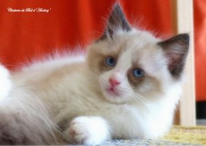 chatons f3